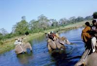 Сафари на слонах в Читване